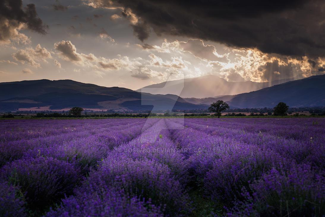 Dramatic fields by JosivBG