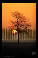 Another Dawn on our Tree by ResidoLancin