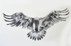 Aguila pluma