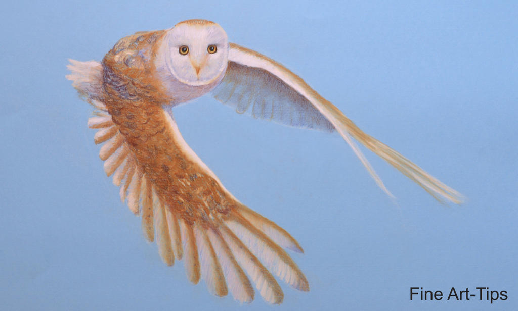 How To Draw A Barn Owl Flying