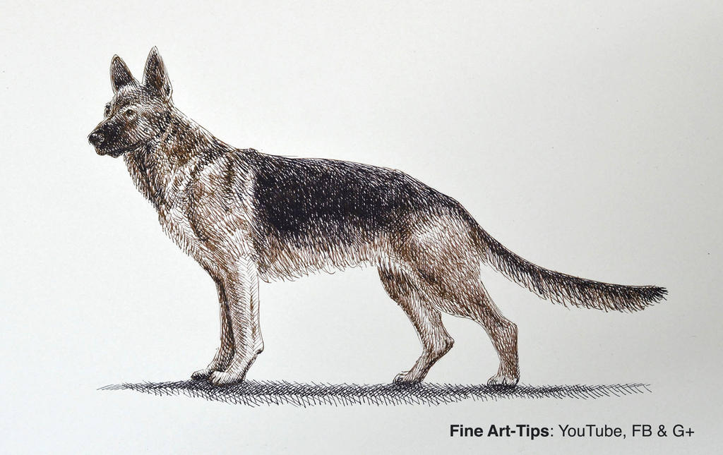 How to Draw a German Shepherd Dog With Pen and Ink by ArtistLeonardo