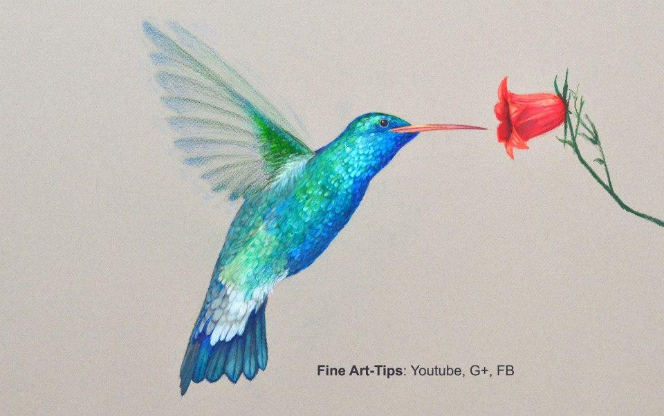 How to Draw a Hummingbird With Color Pencils by ArtistLeonardo
