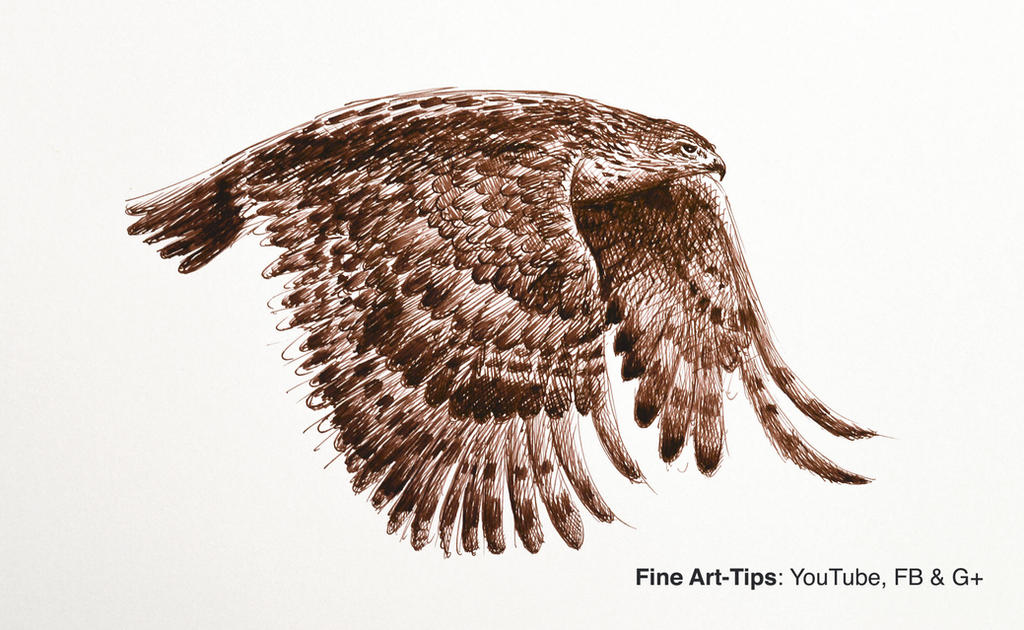How to Draw a Flying Hawk With Fountain Pen by ArtistLeonardo