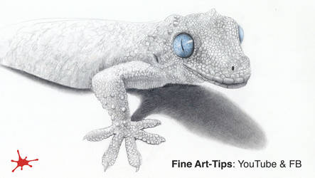 HOW TO DRAW A GECKO - Narrated