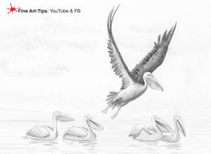 HOW TO DRAW PELICANS - And a true pelican anecdote