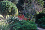 Botanic Gardens 1 stock