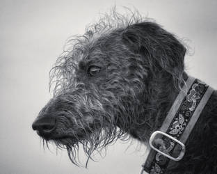 Nippa by Dogbytes