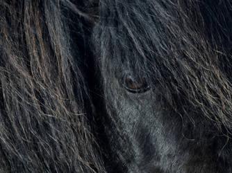 Shetland Pony by Dogbytes