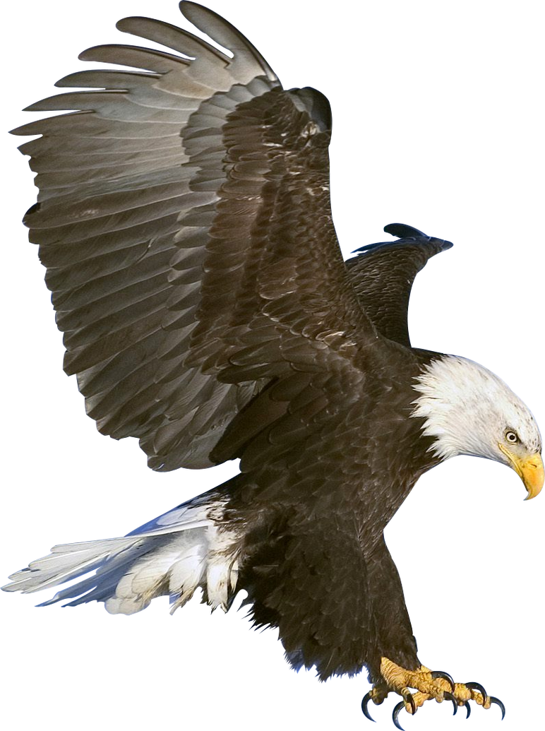 bald eagle render by - photo #1