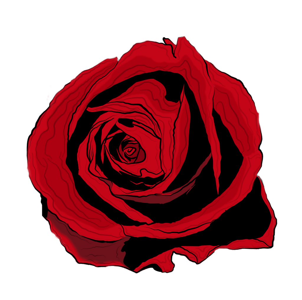 Rose drawing by bobhertley on DeviantArt