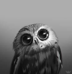 Owl by kamezis