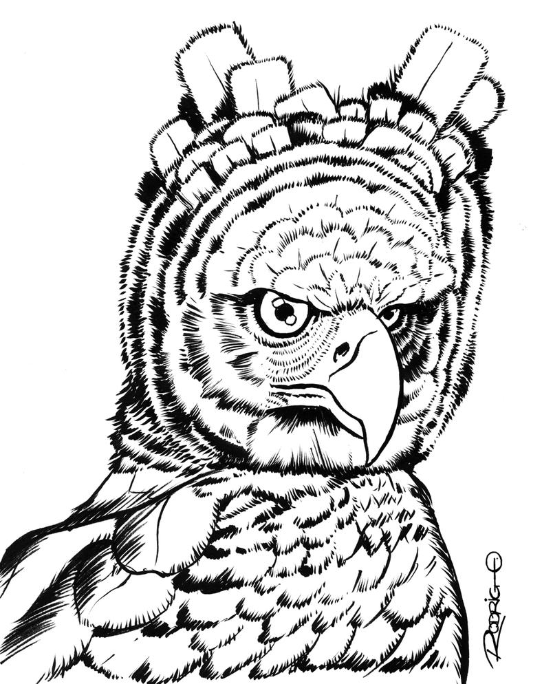 harpy eagle coloring page - harpy eagle drawing for kids the image