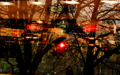 Reflecting Trees in Consumerism by maryapple