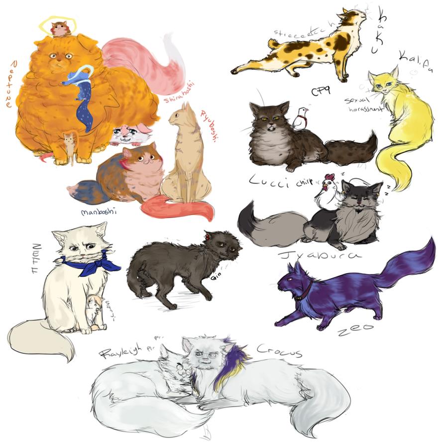 OP Even More Kitties Again By Nire-chan On DeviantArt