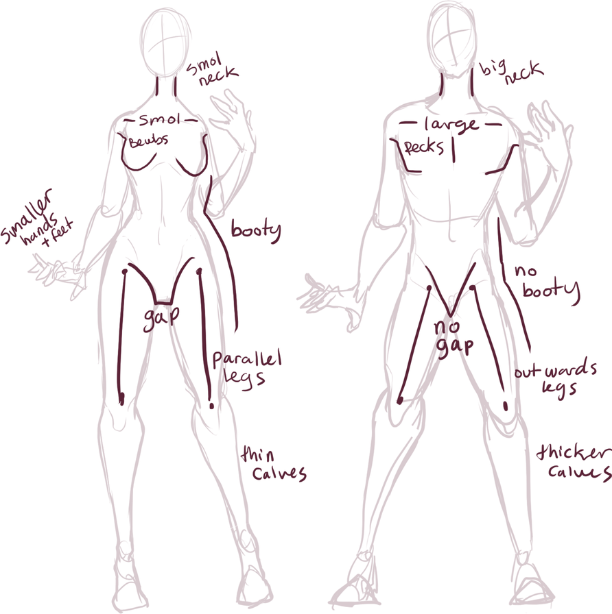 Male vs Female anatomy by Xylerz on DeviantArt