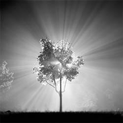 LightTree by camn