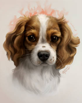 Cute looking doggy commission