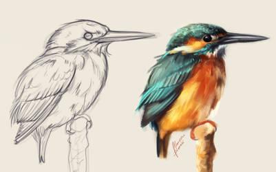 Common kingfisher Sketch vs painting by MarkotnePierniki