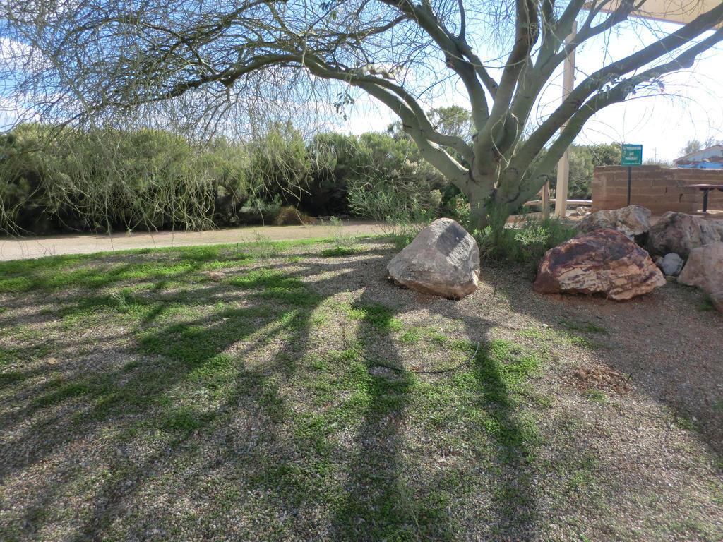 Overshadowing Tree