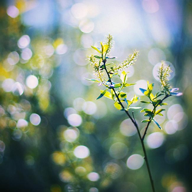 Summer time by Tori-Tolkacheva