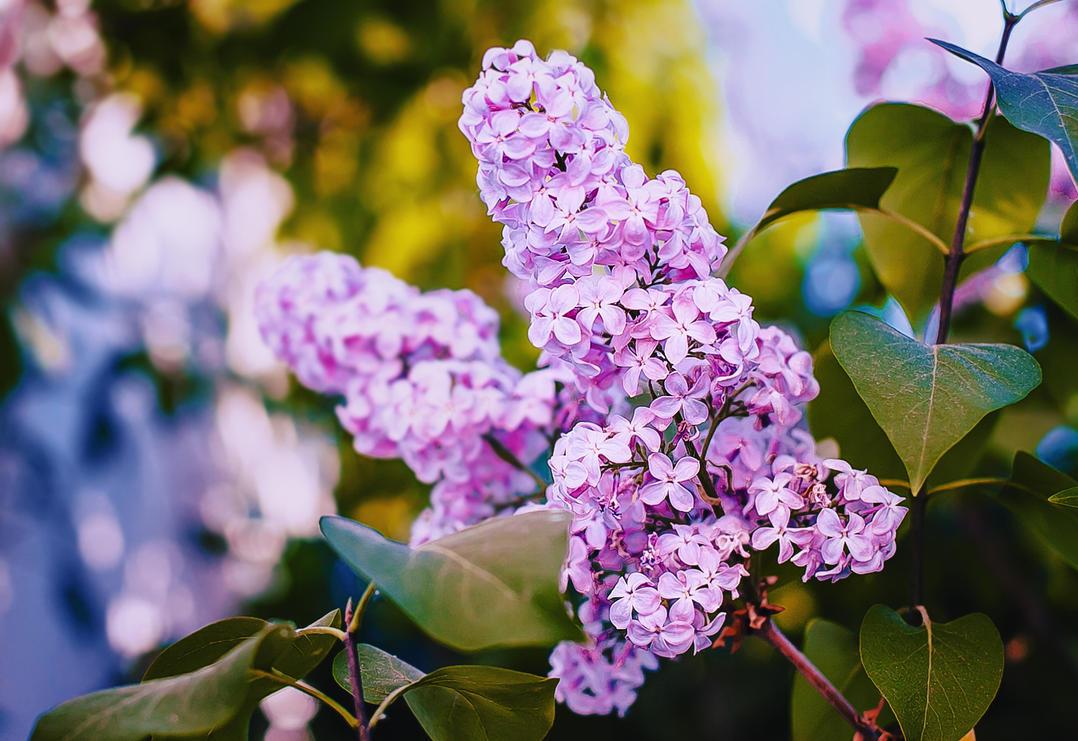 Spring colors by Tori-Tolkacheva