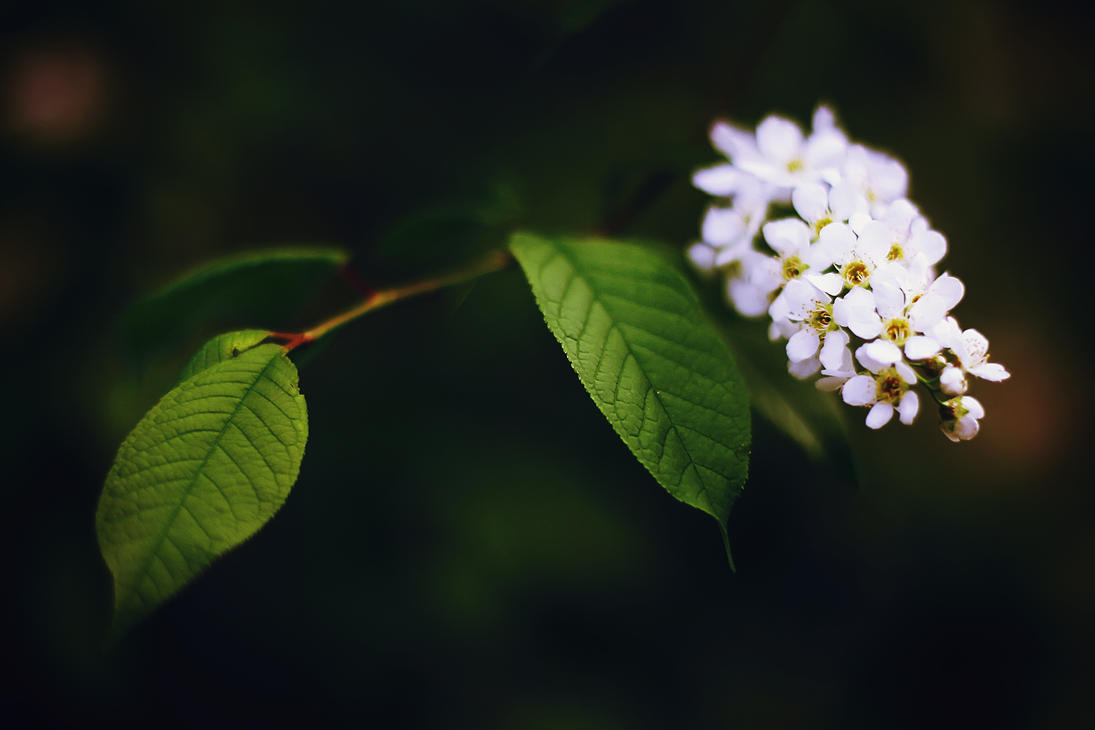 Spring flower by Tori-Tolkacheva