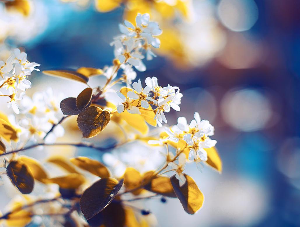 Summer color by Tori-Tolkacheva