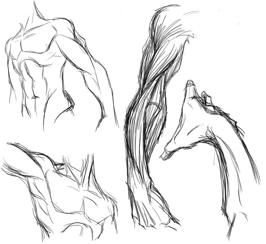 Male Anatomy Study by Dyemelikeasunset