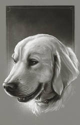 Doug The Dog by ShannonTrottman