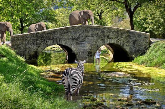le pont aux elephans