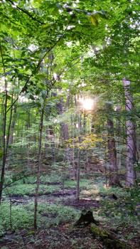 The Sacred Grove Shoot 2