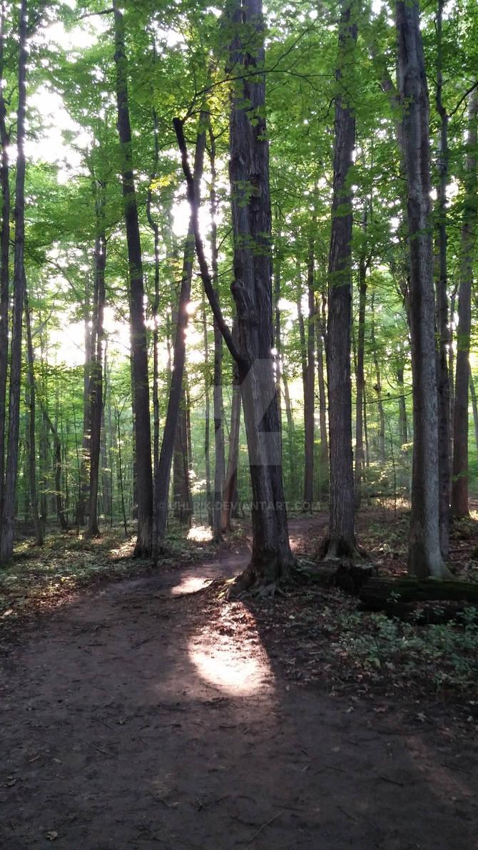 The Sacred Grove Shoot 3