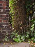 Brick and Ivy