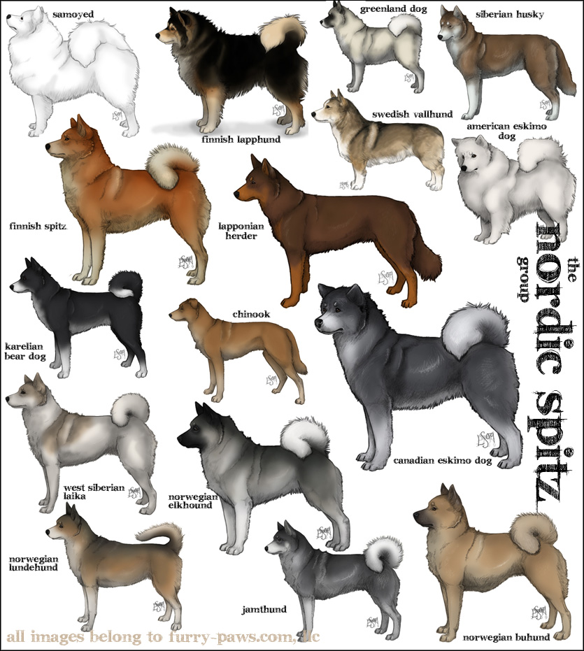 What Are Some German Names For Dogs
