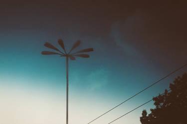 Broken street flower by Shosan