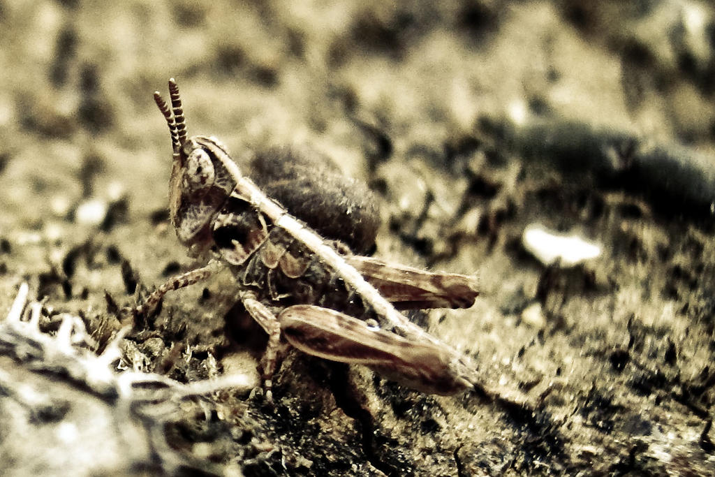 Newborn Grasshopper by Youcef07