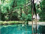 Garden in Jamaica by hllwngrl