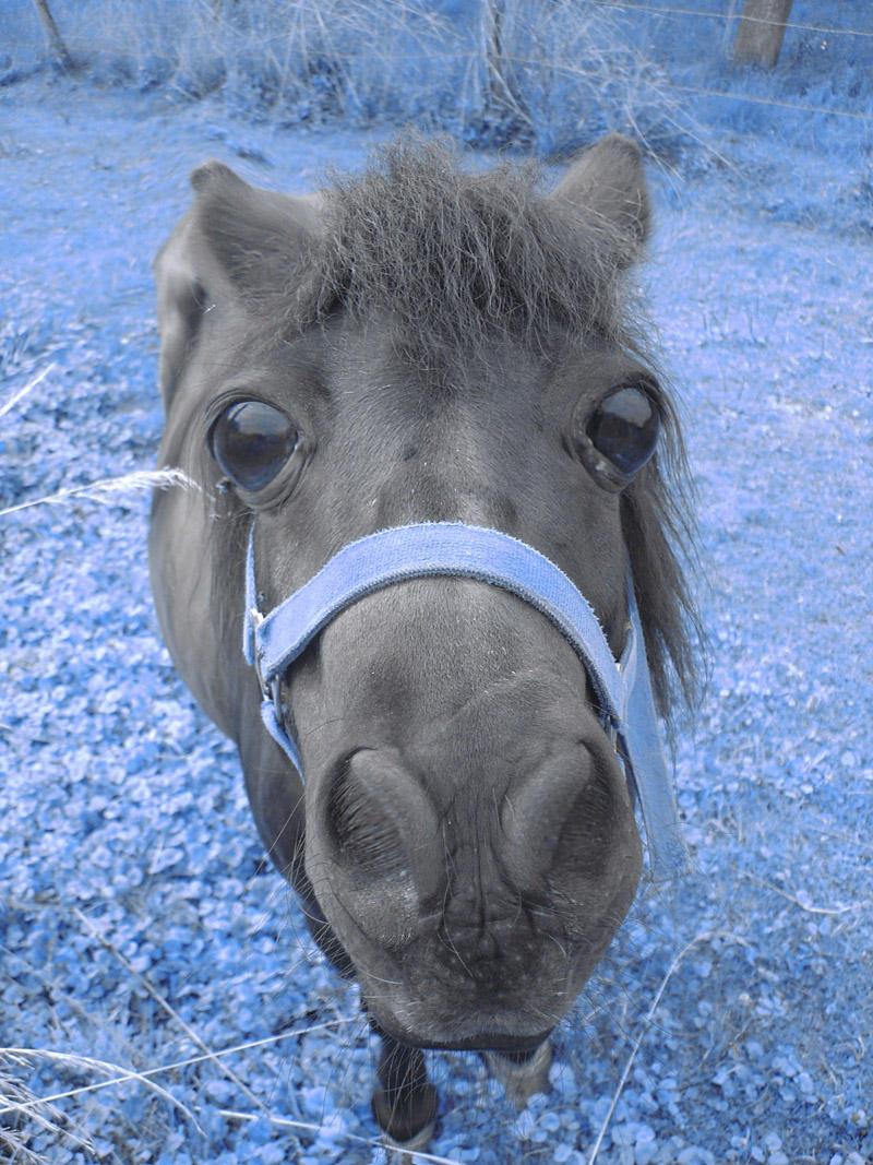horse by Yoshimitsu-EH