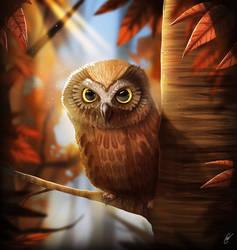 Owl stare right through you