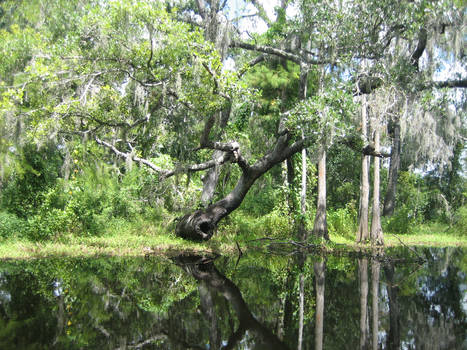 Swampy Reflections by animusanimi