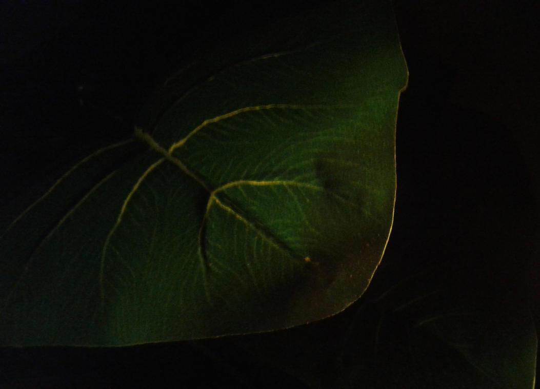 green by ishta00
