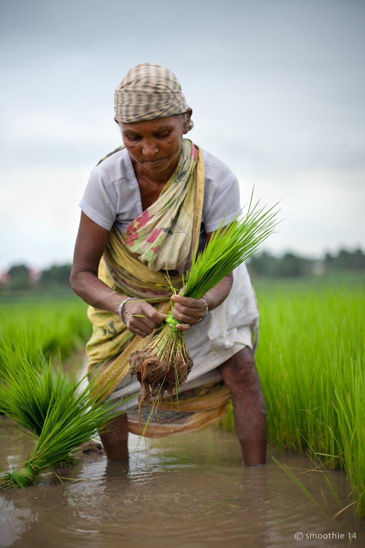 Farmer 3 by khurafati