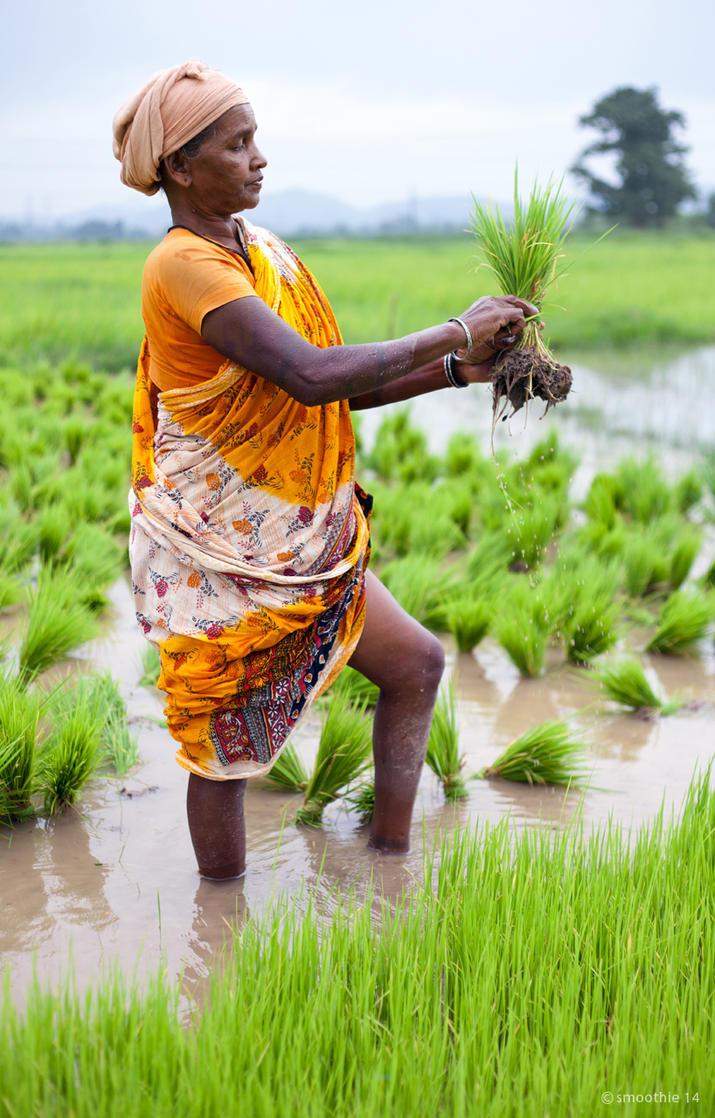 Farmer 4 by khurafati