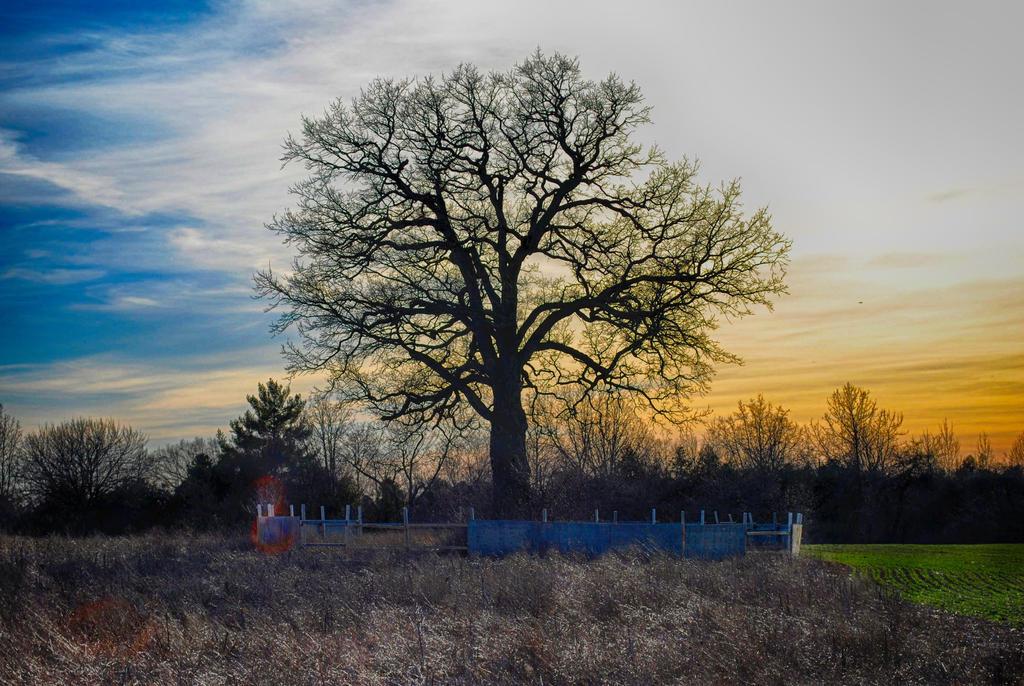 Evening Tree (HDR)