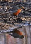 Robin Reflections