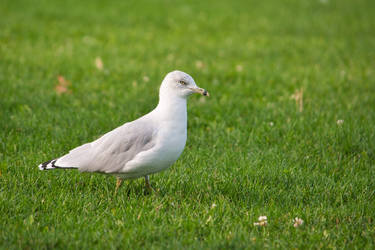 Of Grass and Gulls