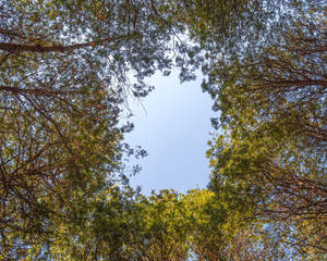 Gap in the Canopy