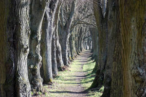 walkway middle of trees 2 by Takiako-Nakashi