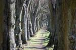 walkway middle of trees 2