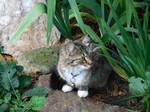 on garden